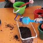 Secuencia didáctica almácigos o siembra indirecta en Sala Rosa y Naranja